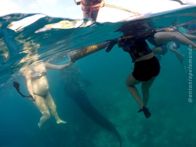 Nadando com tubarões baleias em Cebu