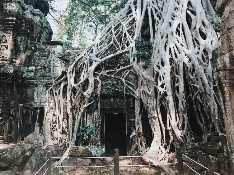 Tah Prohm - Angkor